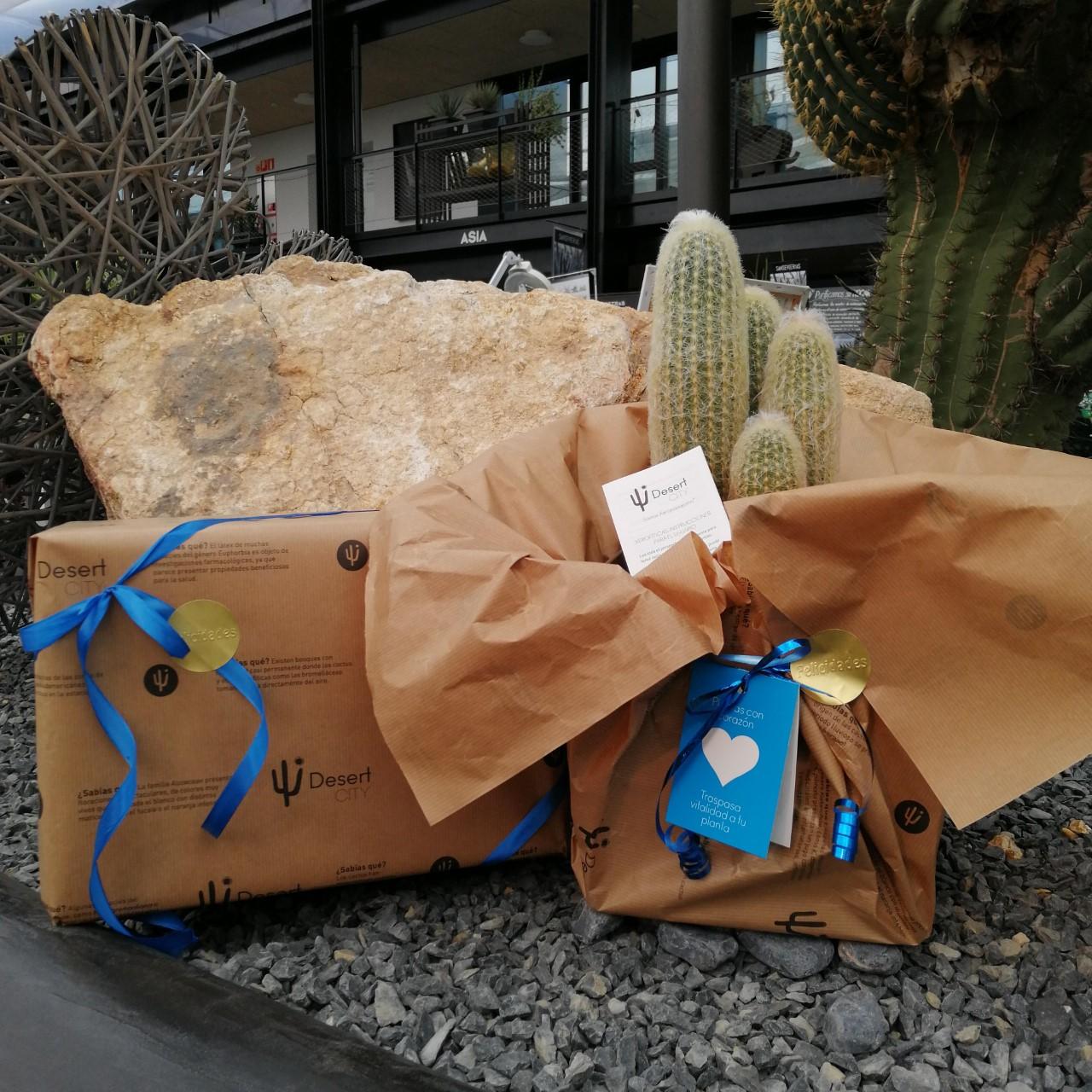 cactus regalo